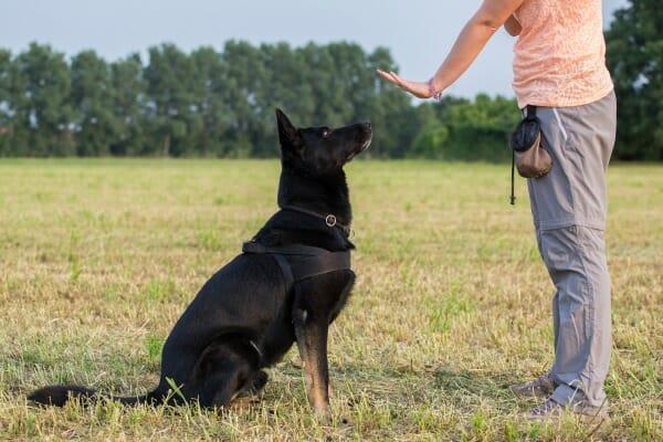 Dog Behavior Training Brighton